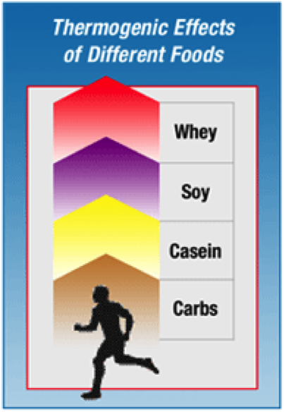 Whey Protein's Benefits for Aging