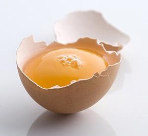 Bravo_Egg_Replacement_Video.jpg